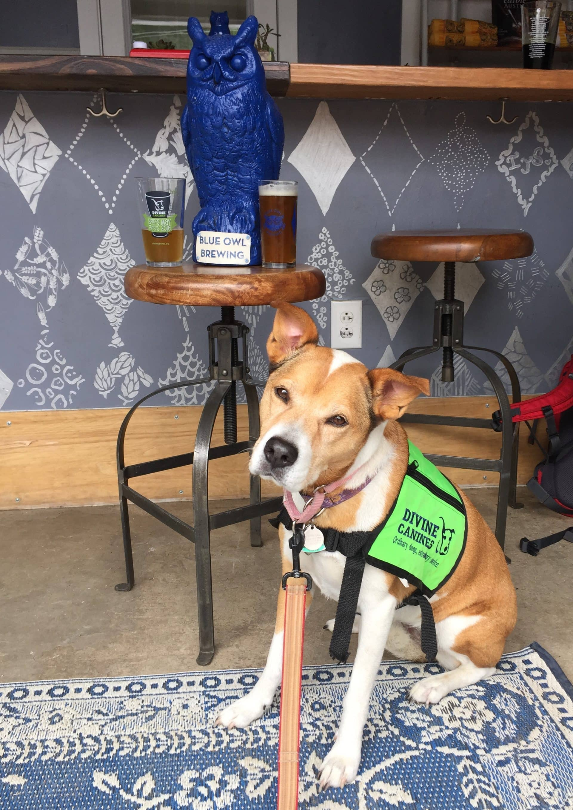 Divine Canines Annual Barks for Beers 2017 Recap